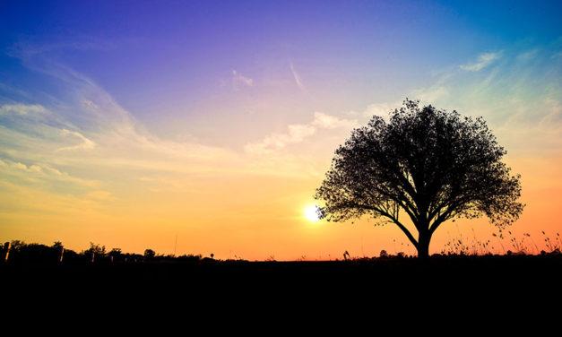 Spiritually Evolving: Lee Channing November 2012